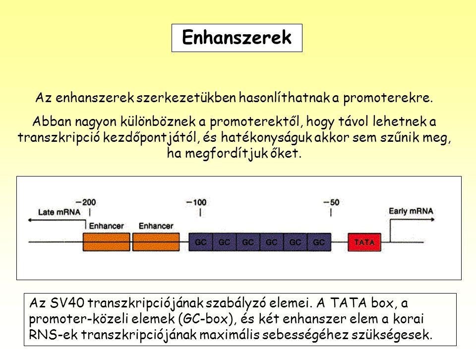 Az enhanszerek szerkezetükben hasonlíthatnak a promoterekre.