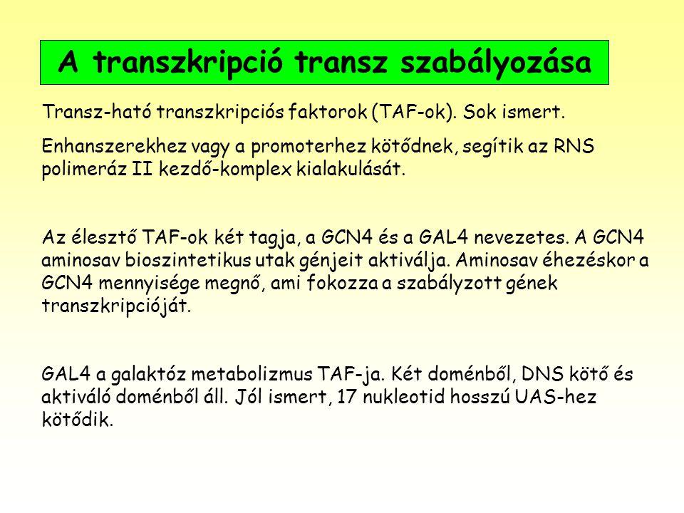 A transzkripció transz szabályozása