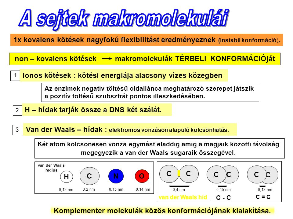 A sejtek makromolekulái