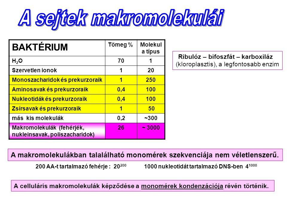 Ribulóz – bifoszfát – karboxiláz