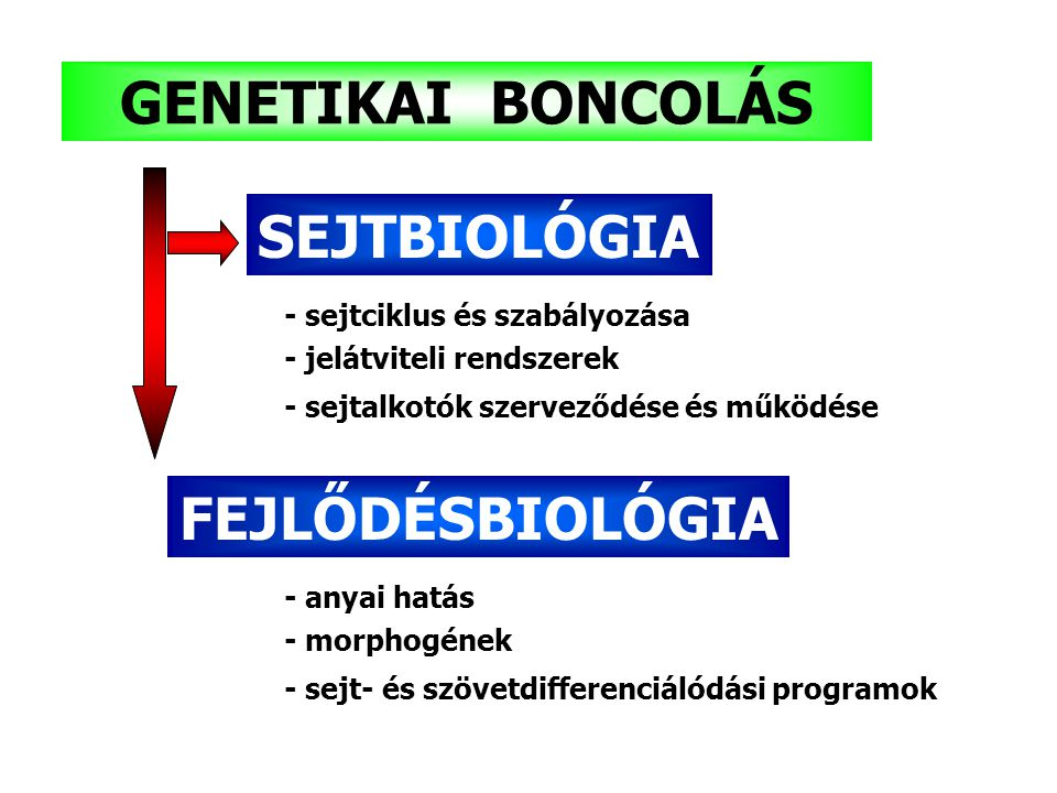 GENETIKAI BONCOLÁS FEJLŐDÉSBIOLÓGIA
