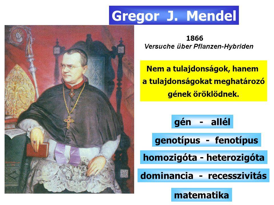 Gregor J. Mendel gén - allél genotípus - fenotípus