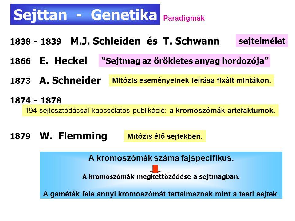 Sejttan - Genetika 1838 - 1839 M.J. Schleiden és T. Schwann