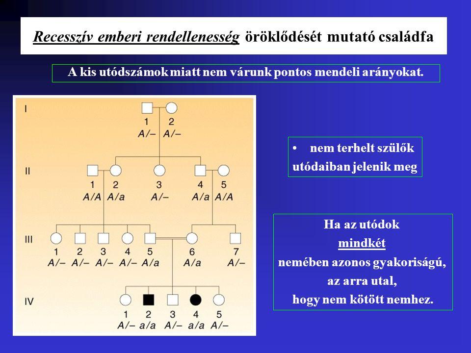 Recesszív emberi rendellenesség öröklődését mutató családfa