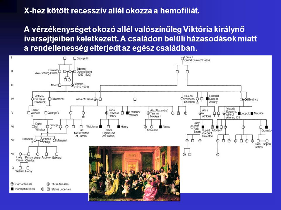 X-hez kötött recesszív allél okozza a hemofiliát
