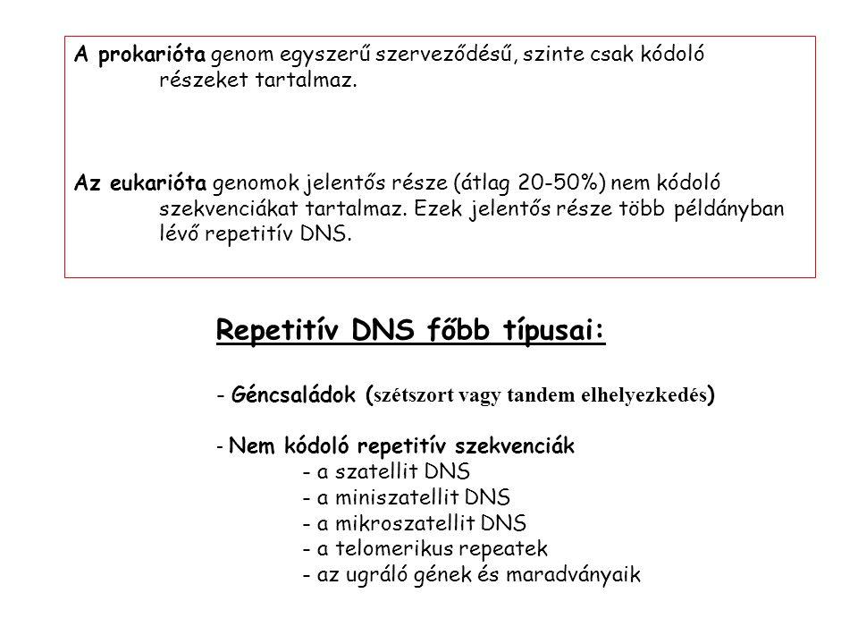 Repetitív DNS főbb típusai: