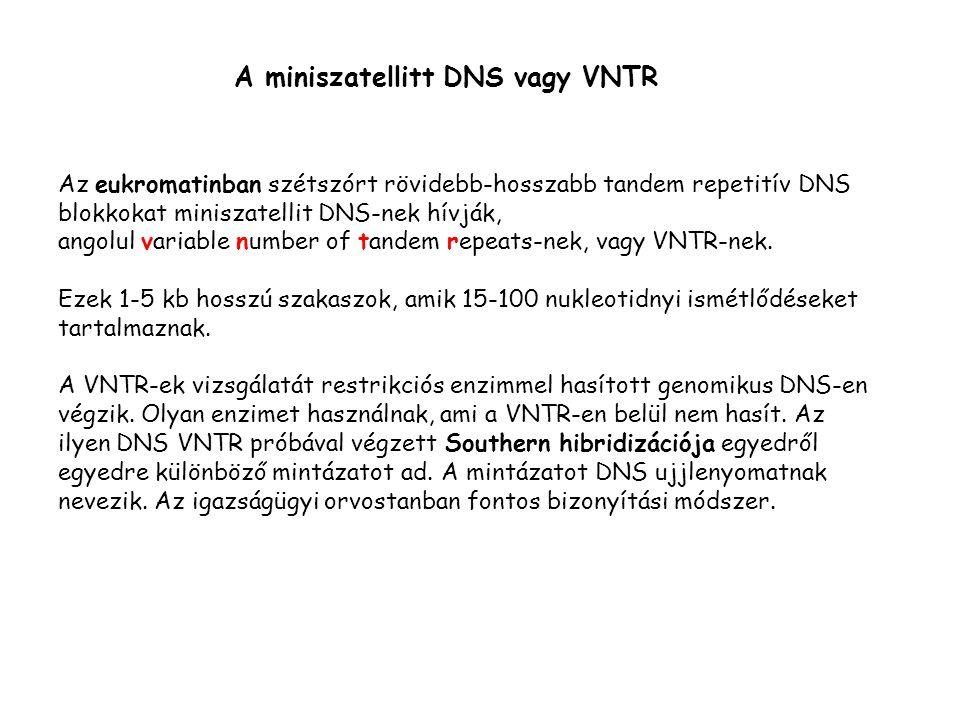 A miniszatellitt DNS vagy VNTR