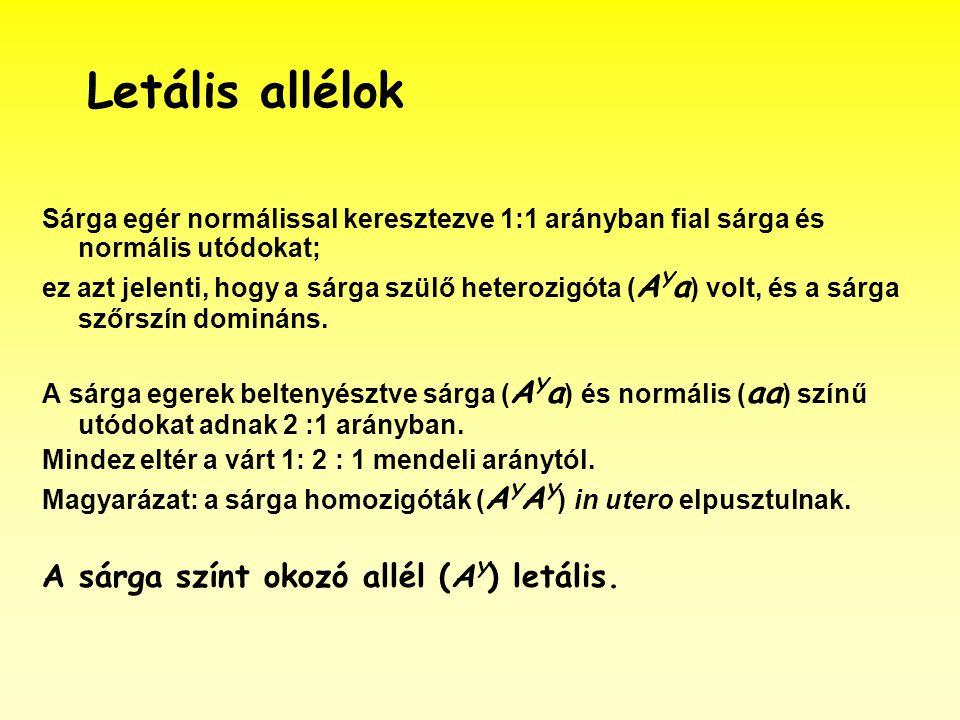 Letális allélok A sárga színt okozó allél (AY) letális.