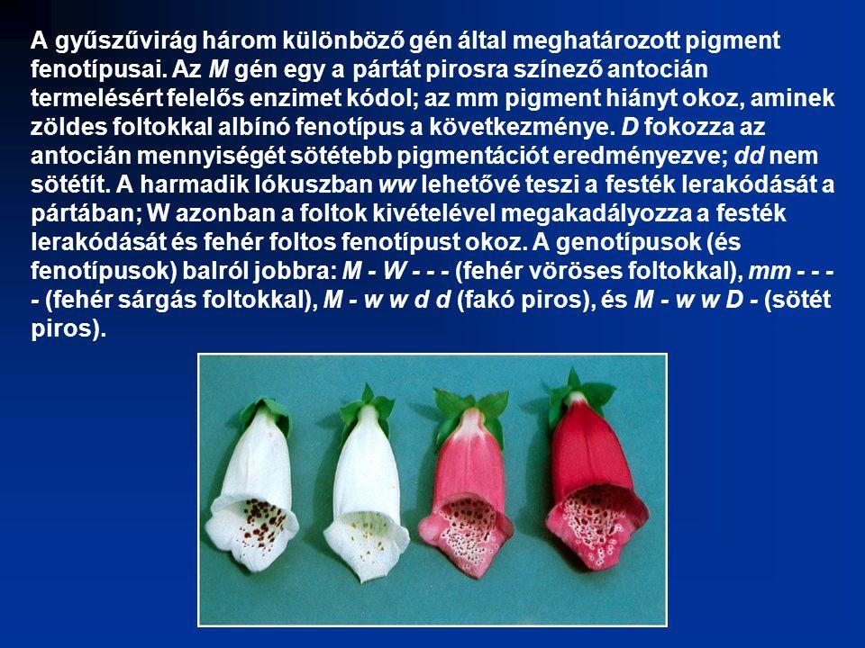 A gyűszűvirág három különböző gén által meghatározott pigment fenotípusai.