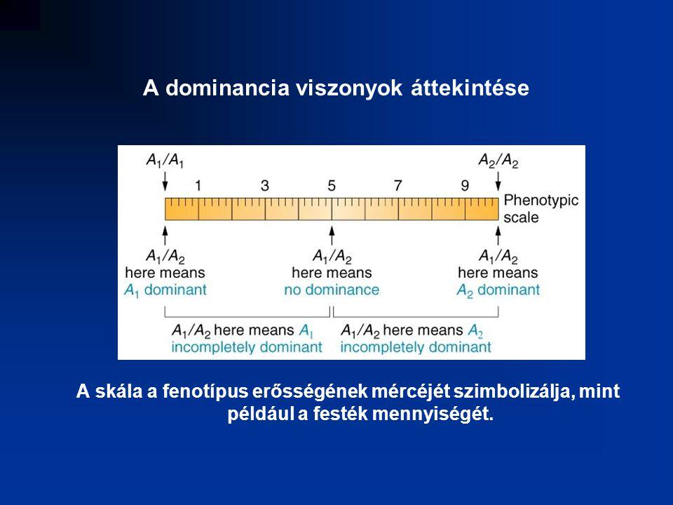 A dominancia viszonyok áttekintése