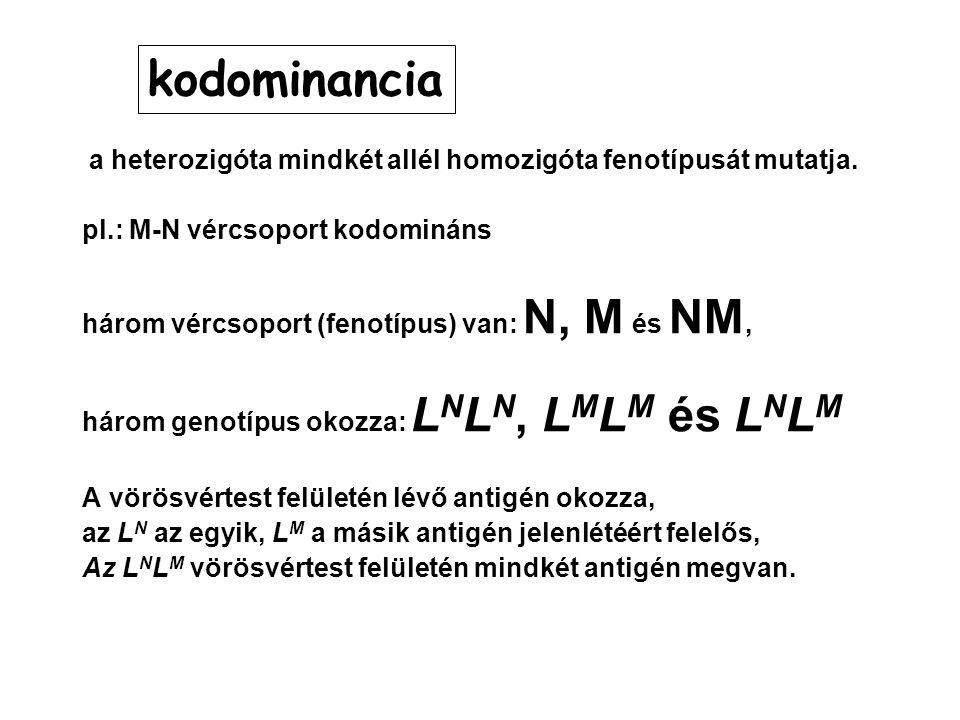 kodominancia a heterozigóta mindkét allél homozigóta fenotípusát mutatja. pl.: M-N vércsoport kodomináns.