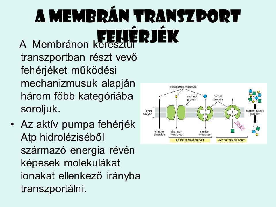 A membrán transzport fehérjék