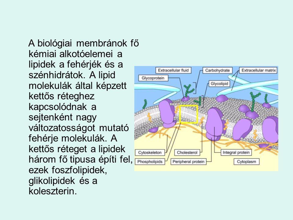 A biológiai membránok fő kémiai alkotóelemei a lipidek a fehérjék és a szénhidrátok.