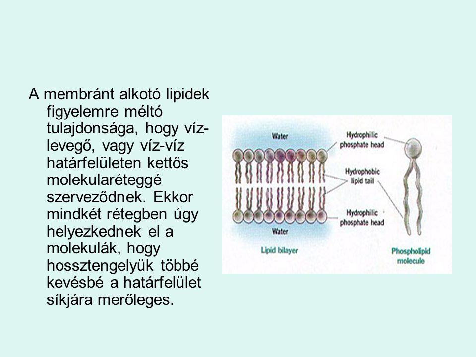 A membránt alkotó lipidek figyelemre méltó tulajdonsága, hogy víz-levegő, vagy víz-víz határfelületen kettős molekularéteggé szerveződnek.