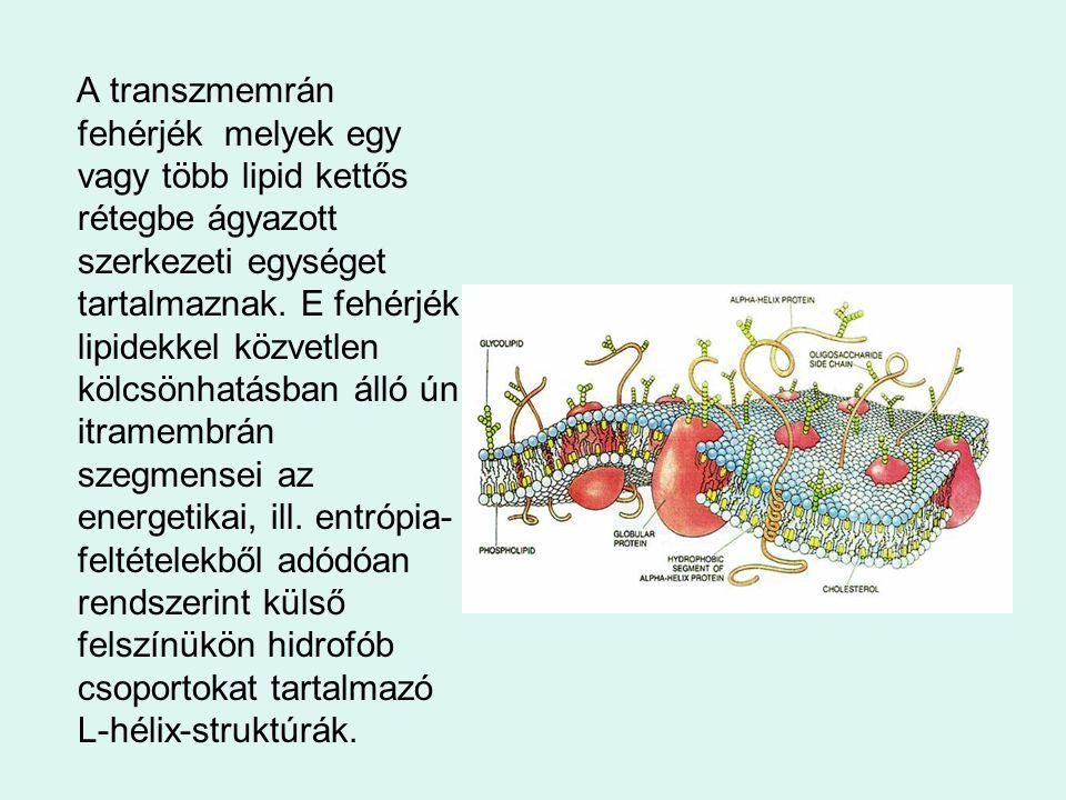 A transzmemrán fehérjék melyek egy vagy több lipid kettős rétegbe ágyazott szerkezeti egységet tartalmaznak.