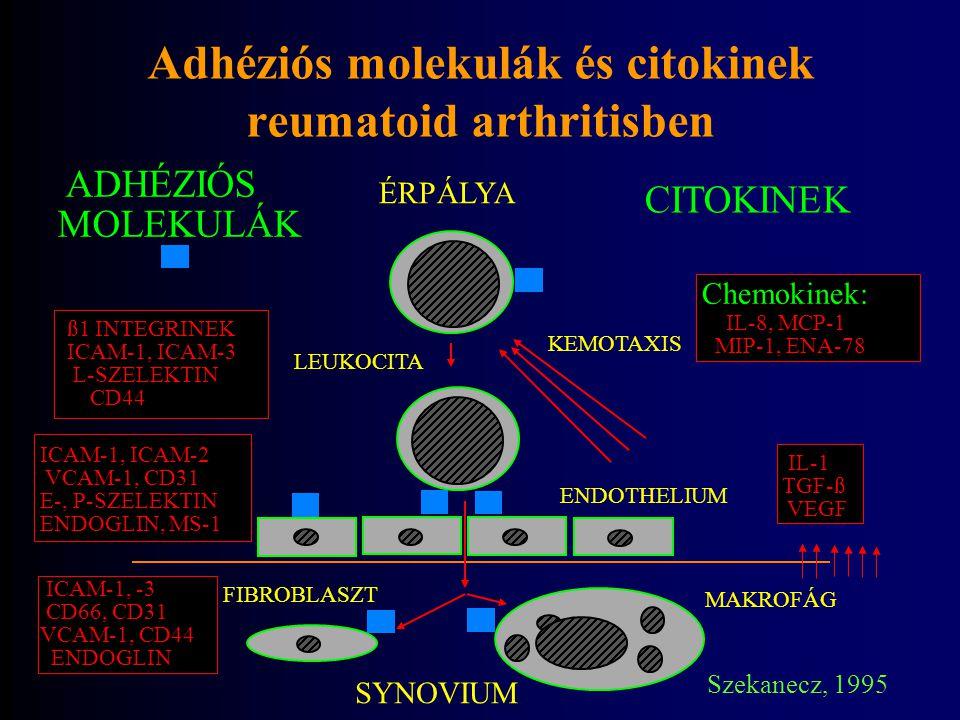 Adhéziós molekulák és citokinek reumatoid arthritisben