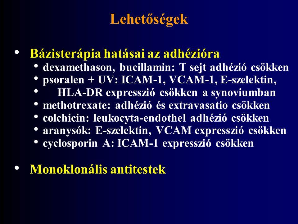 Lehetőségek Bázisterápia hatásai az adhézióra Monoklonális antitestek