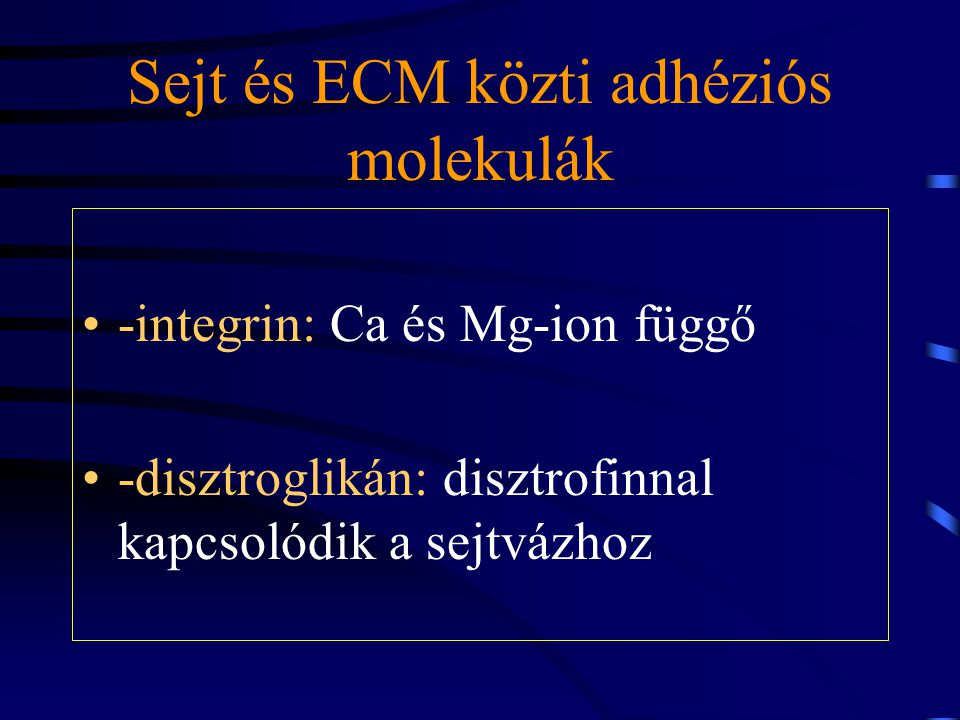 Sejt és ECM közti adhéziós molekulák