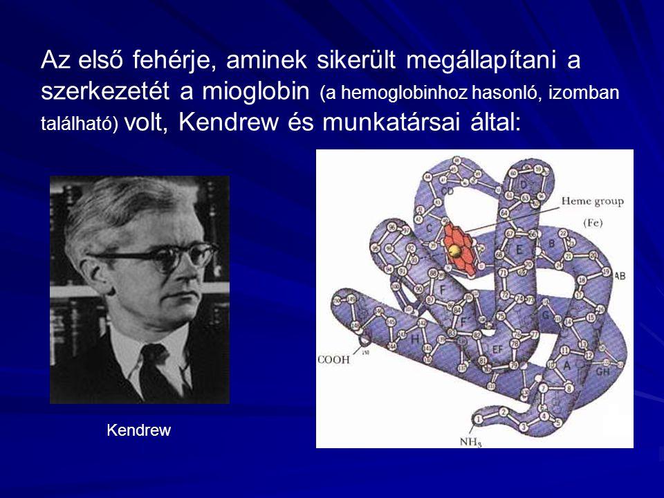 Az első fehérje, aminek sikerült megállapítani a szerkezetét a mioglobin (a hemoglobinhoz hasonló, izomban található) volt, Kendrew és munkatársai által: