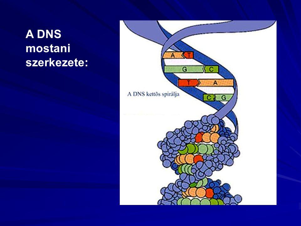 A DNS mostani szerkezete: