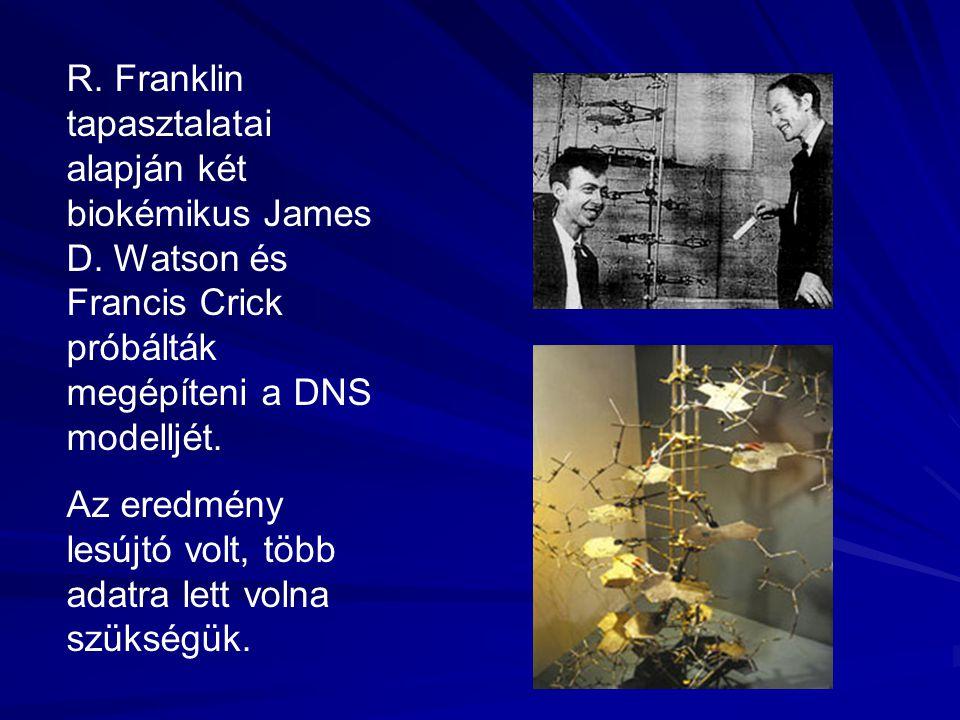 R. Franklin tapasztalatai alapján két biokémikus James D