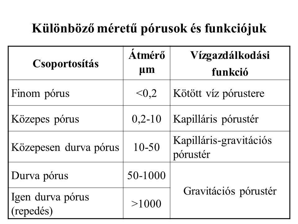 Különböző méretű pórusok és funkciójuk