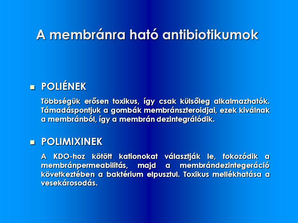 A membránra ható antibiotikumok