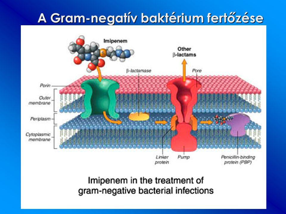 A Gram-negatív baktérium fertőzése
