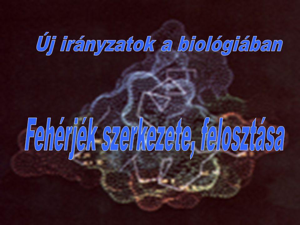 Új irányzatok a biológiában Fehérjék szerkezete, felosztása