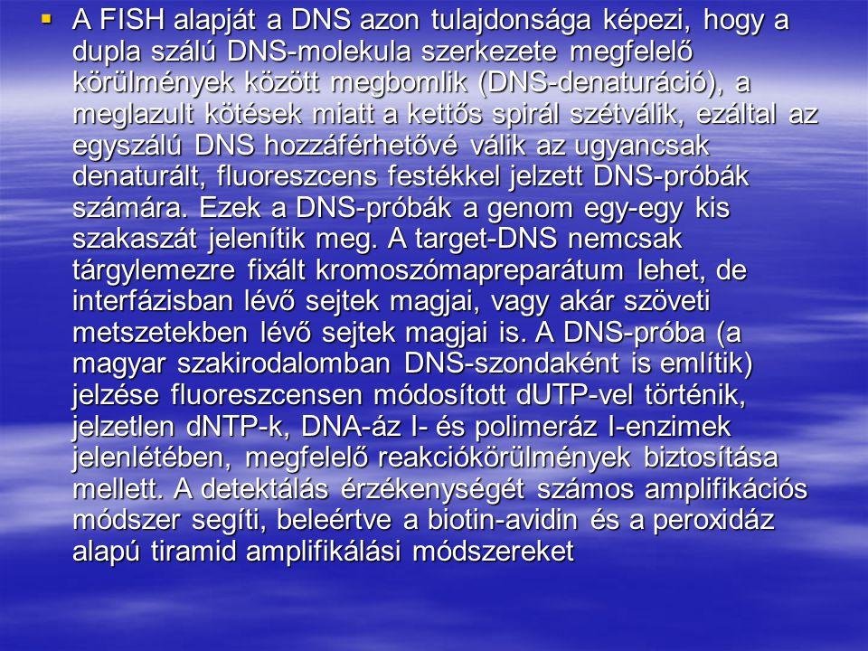 A FISH alapját a DNS azon tulajdonsága képezi, hogy a dupla szálú DNS-molekula szerkezete megfelelő körülmények között megbomlik (DNS-denaturáció), a meglazult kötések miatt a kettős spirál szétválik, ezáltal az egyszálú DNS hozzáférhetővé válik az ugyancsak denaturált, fluoreszcens festékkel jelzett DNS-próbák számára.
