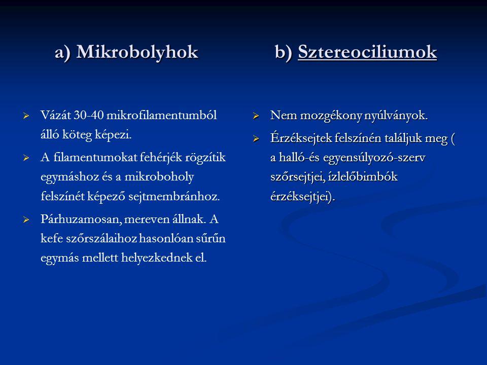 a) Mikrobolyhok b) Sztereociliumok