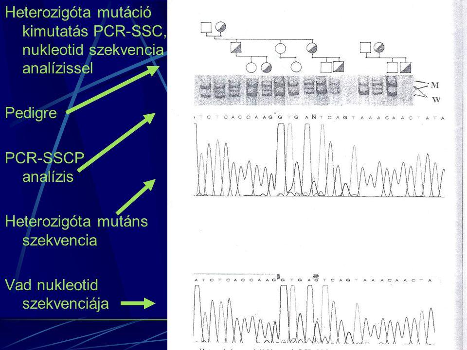 Heterozigóta mutáció kimutatás PCR-SSC, nukleotid szekvencia analízissel