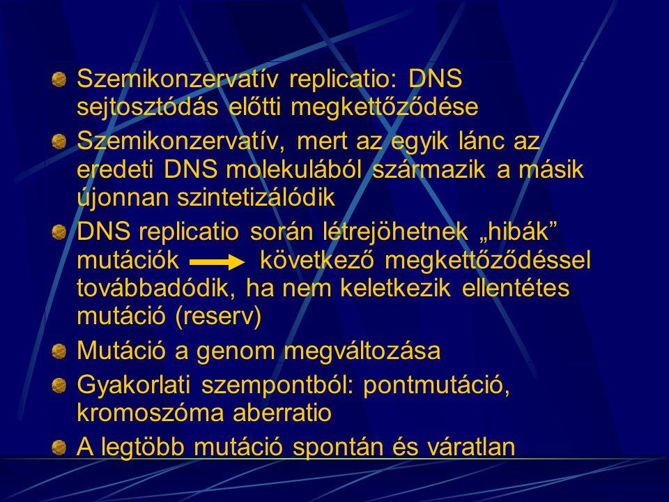 Szemikonzervatív replicatio: DNS sejtosztódás előtti megkettőződése