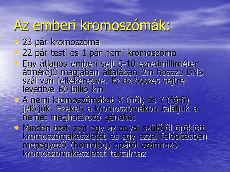 Az emberi kromoszómák: