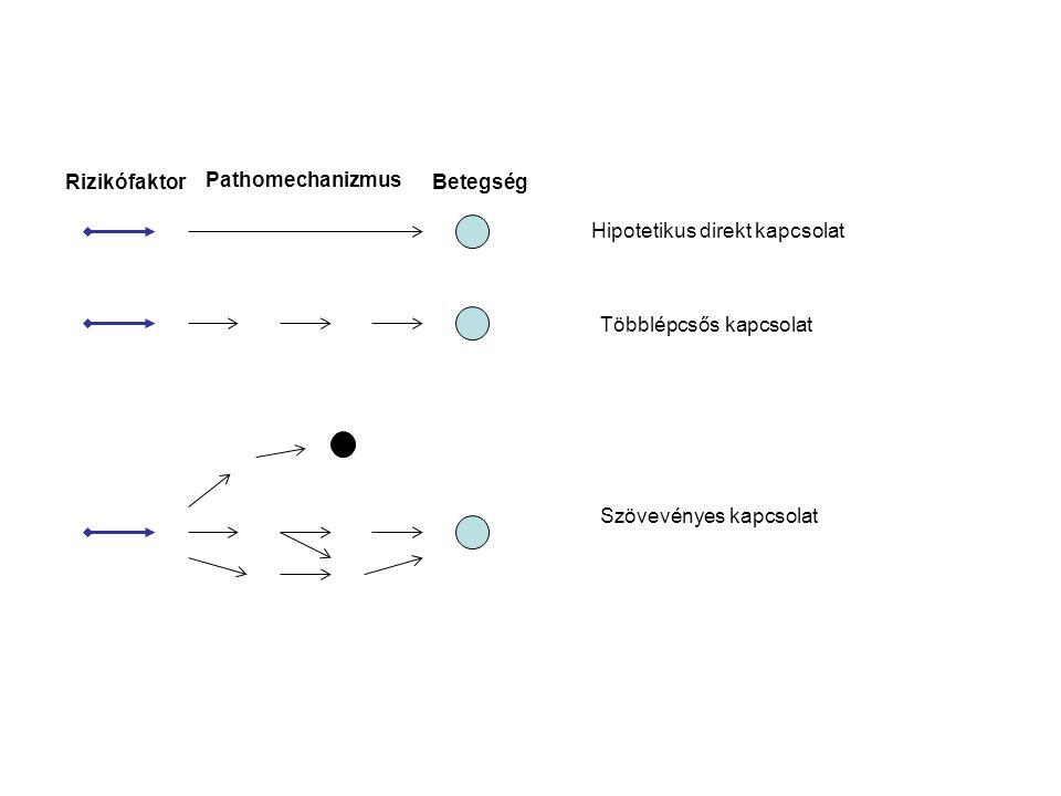 Rizikófaktor Pathomechanizmus. Betegség. Hipotetikus direkt kapcsolat.