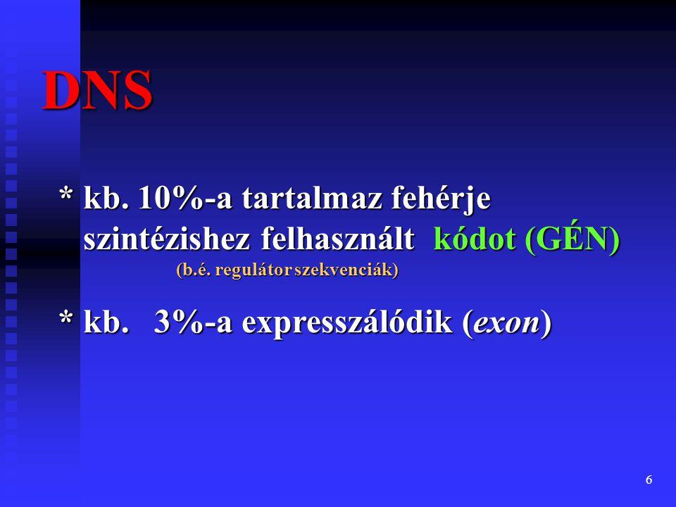 DNS * kb. 10%-a tartalmaz fehérje szintézishez felhasznált kódot (GÉN) (b.é. regulátor szekvenciák)