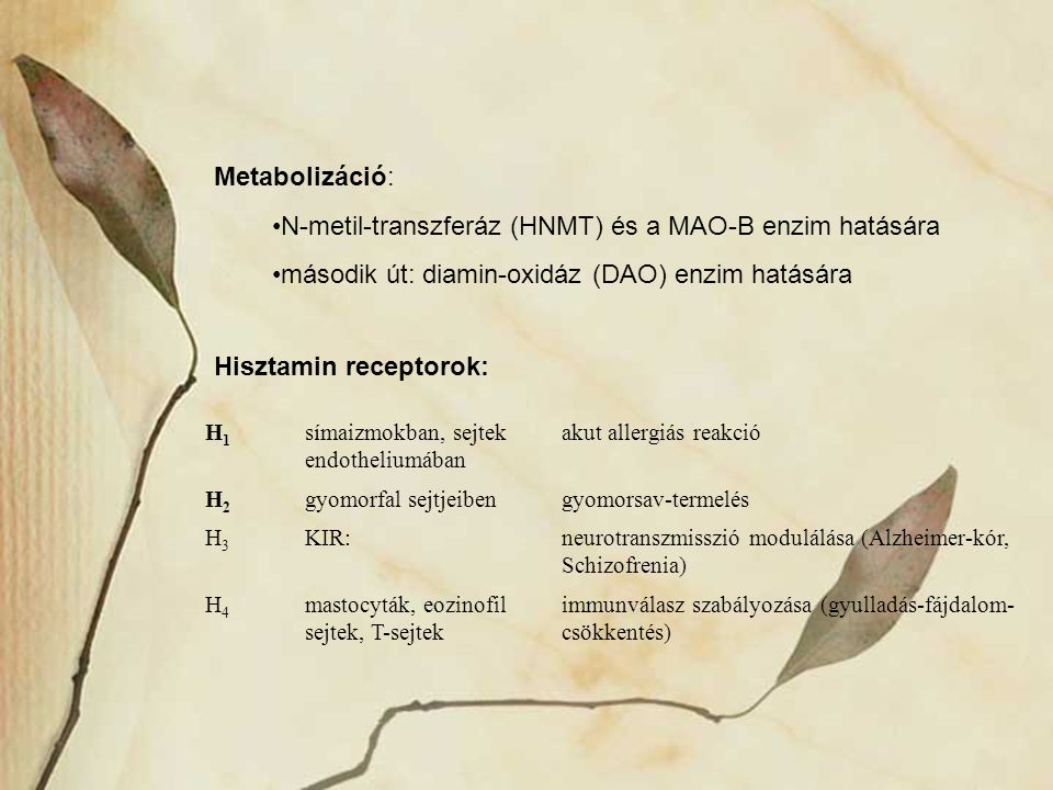 N-metil-transzferáz (HNMT) és a MAO-B enzim hatására