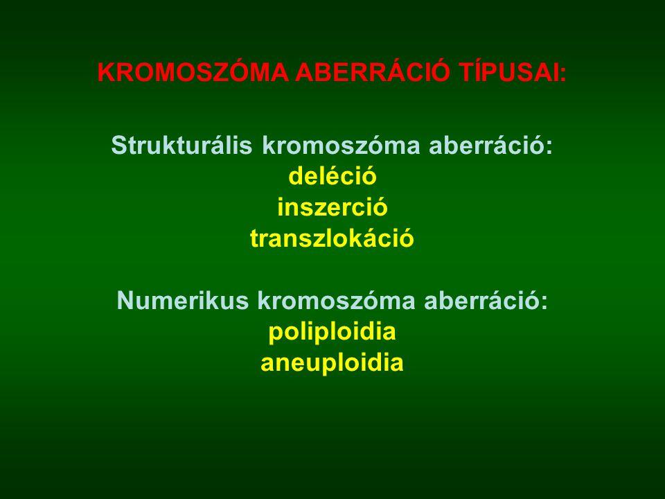 KROMOSZÓMA ABERRÁCIÓ TÍPUSAI: