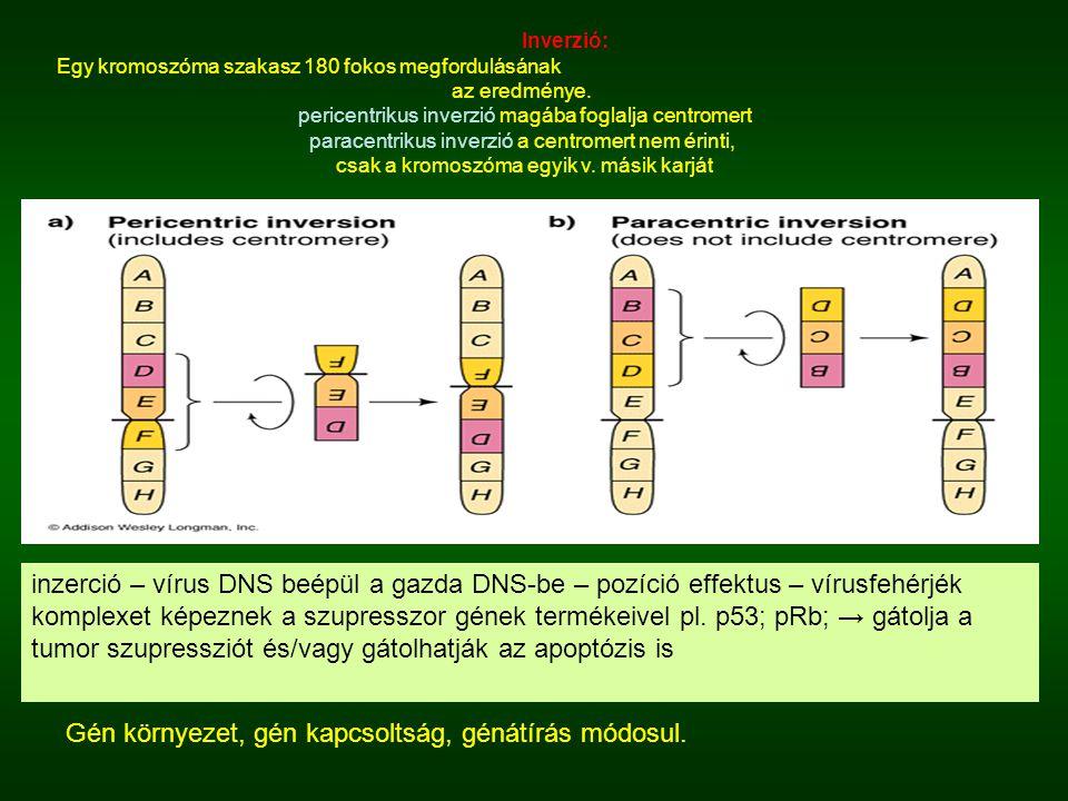 Gén környezet, gén kapcsoltság, génátírás módosul.