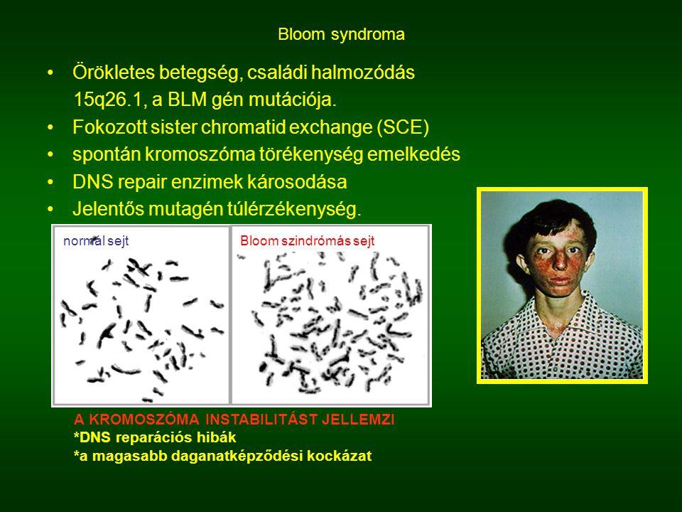 Örökletes betegség, családi halmozódás 15q26.1, a BLM gén mutációja.