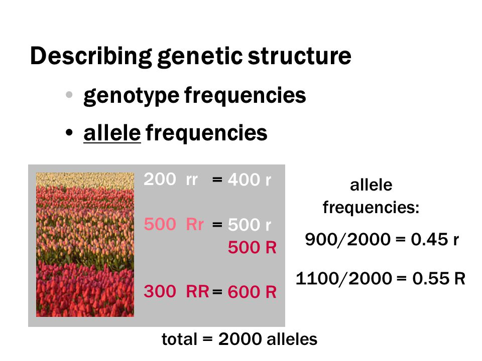 Describing genetic structure