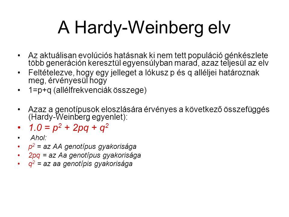 A Hardy-Weinberg elv 1.0 = p2 + 2pq + q2