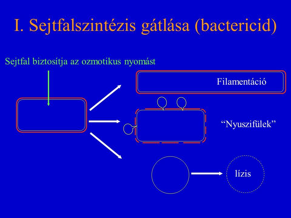 I. Sejtfalszintézis gátlása (bactericid)