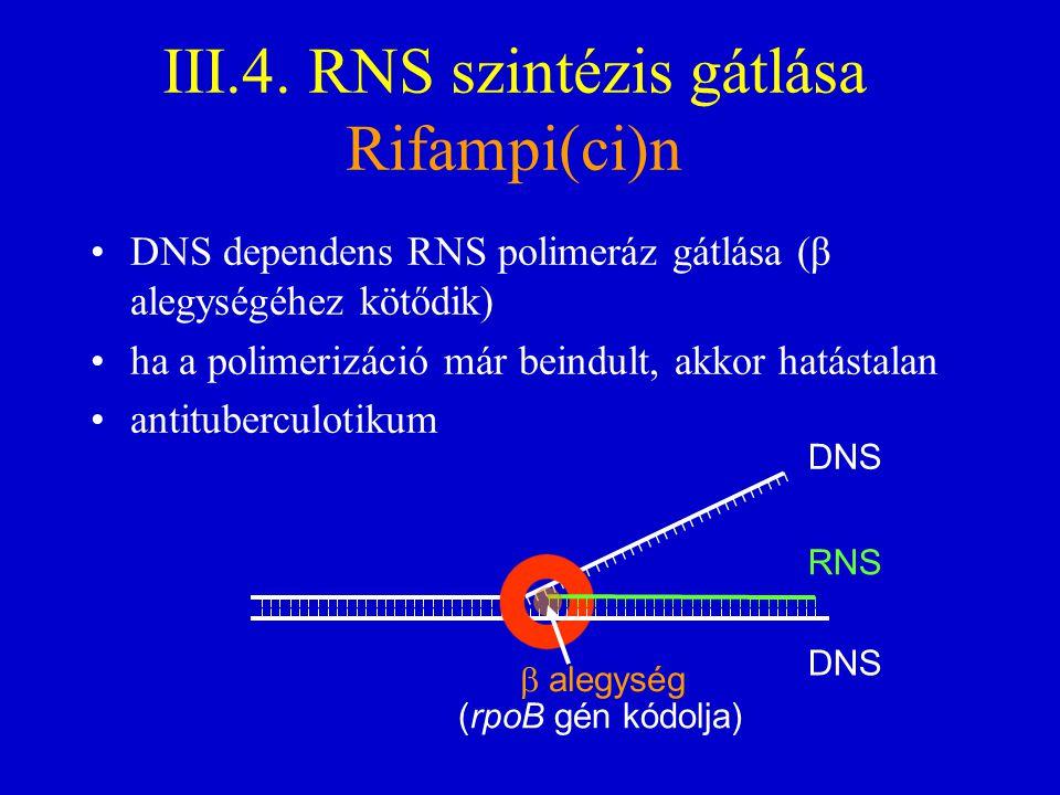 III.4. RNS szintézis gátlása Rifampi(ci)n