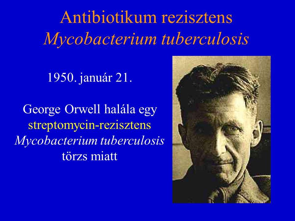 Antibiotikum rezisztens Mycobacterium tuberculosis