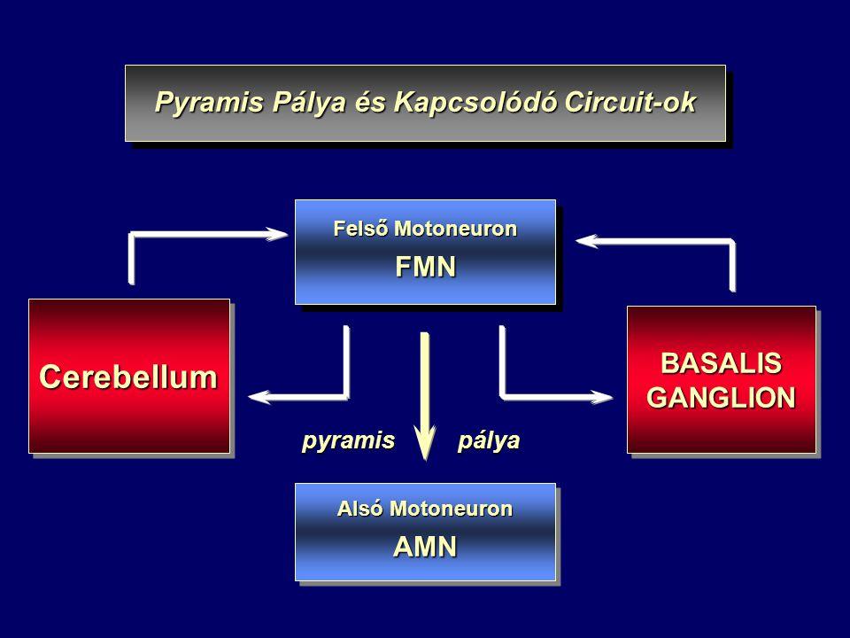 Pyramis Pálya és Kapcsolódó Circuit-ok