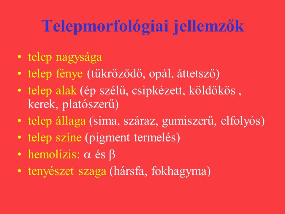 Telepmorfológiai jellemzők