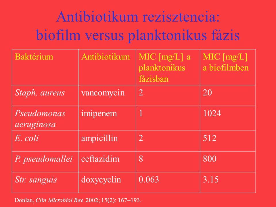 Antibiotikum rezisztencia: biofilm versus planktonikus fázis