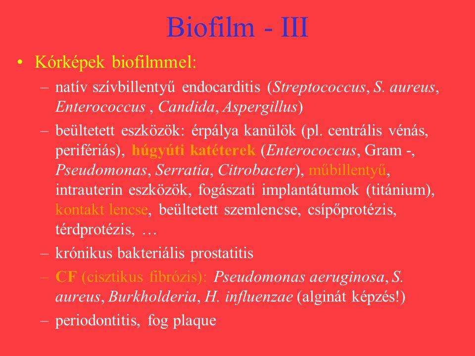 Biofilm - III Kórképek biofilmmel: