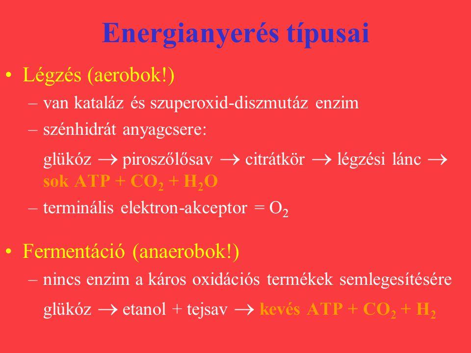 Energianyerés típusai